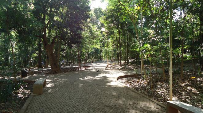 Bosque Central de Londrina